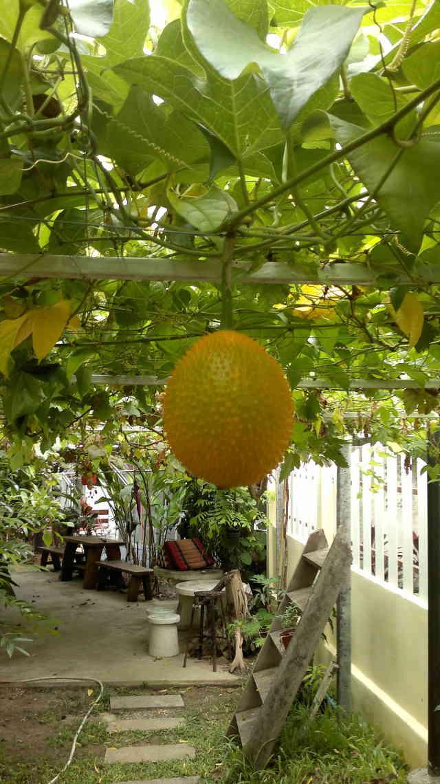 Med tillhörande frukt