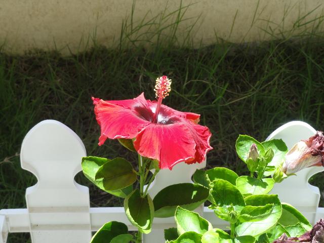 14 - Blomma