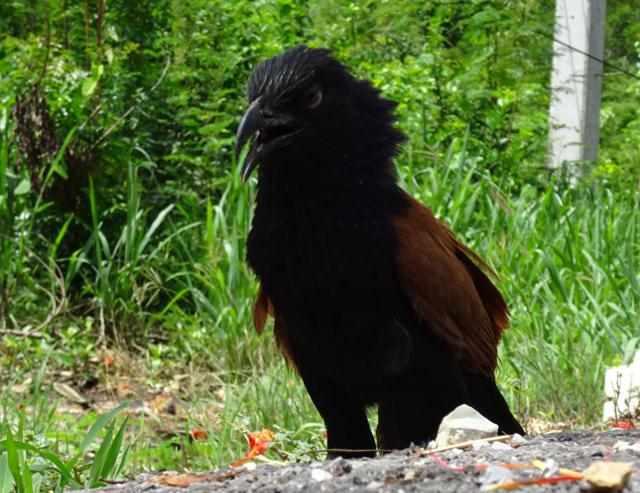5 - Lite omtumlad fågel