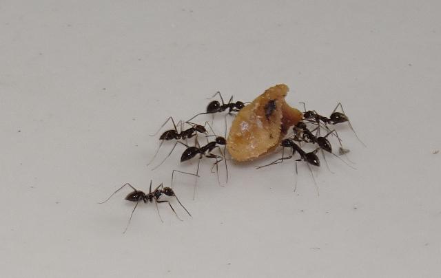 6 - Flitig som en myra
