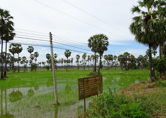 5 - Risfält som är vackra