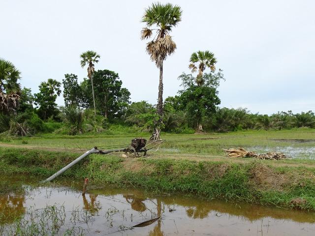 8 - Ur kanalen pumpar man ut på risfälten