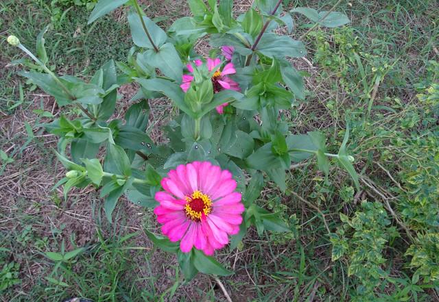 4 - Blomma