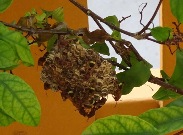 8 - Bättre bild på bi eller getingbo